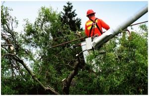 Staten Island Tree Company - Tree Removal